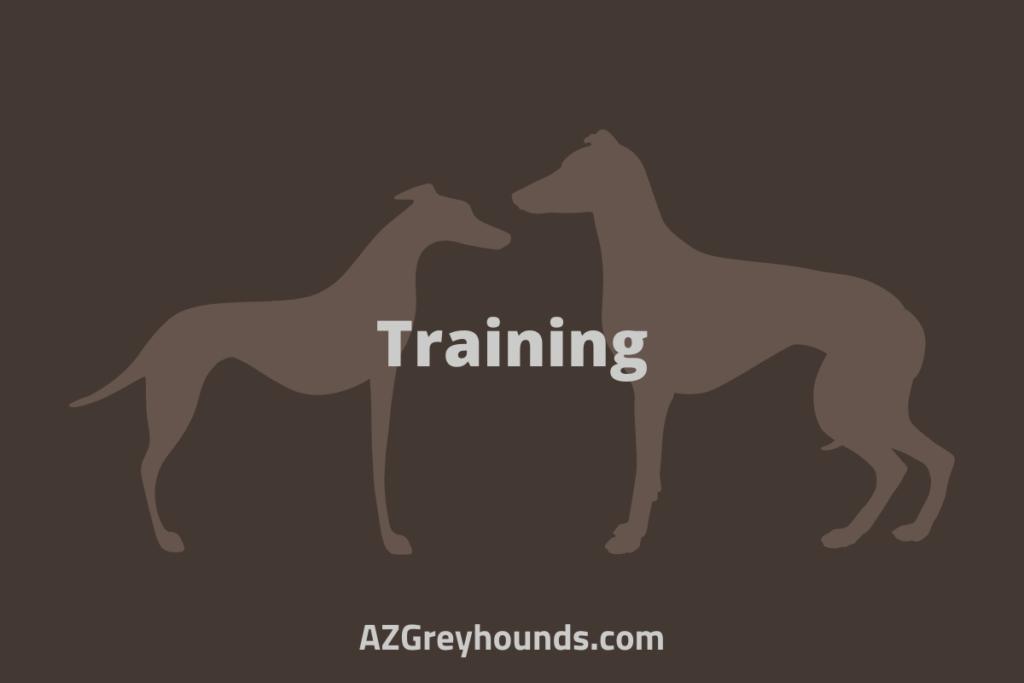 whippet vs greyhound speed