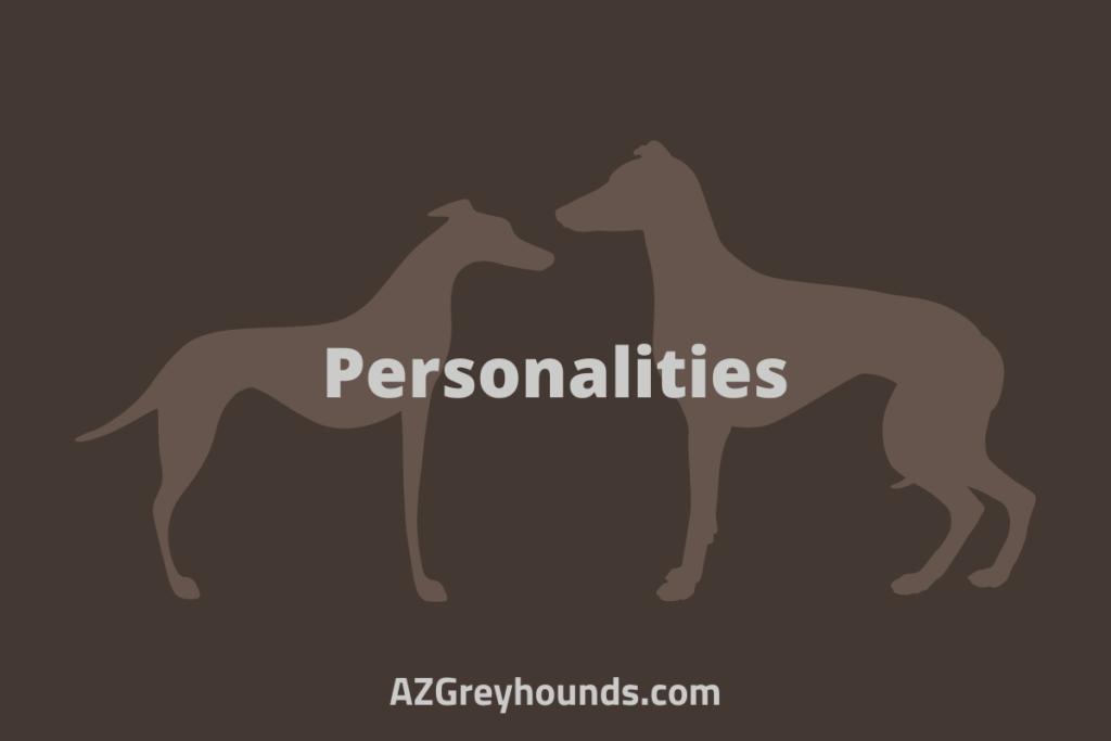 whippet vs italian greyhound personality