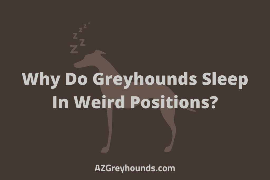 why do greyhounds sleep upside down