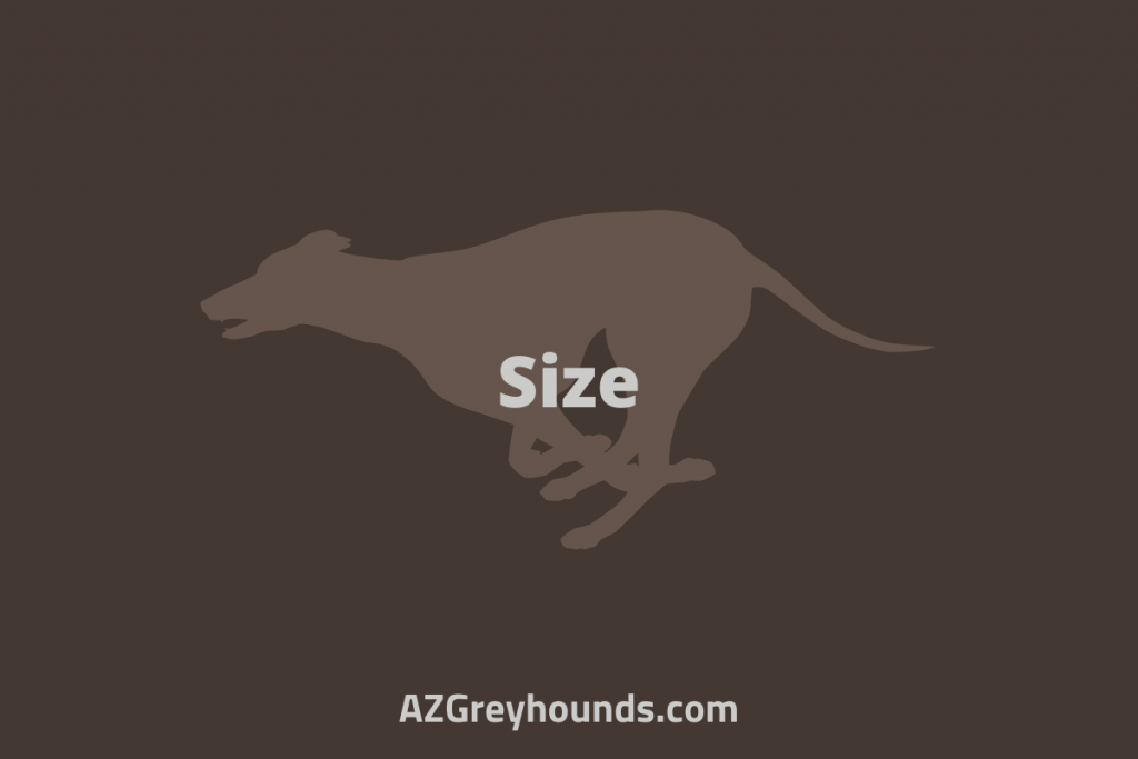 why greyhounds are good pets